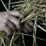 Landwirt Hände